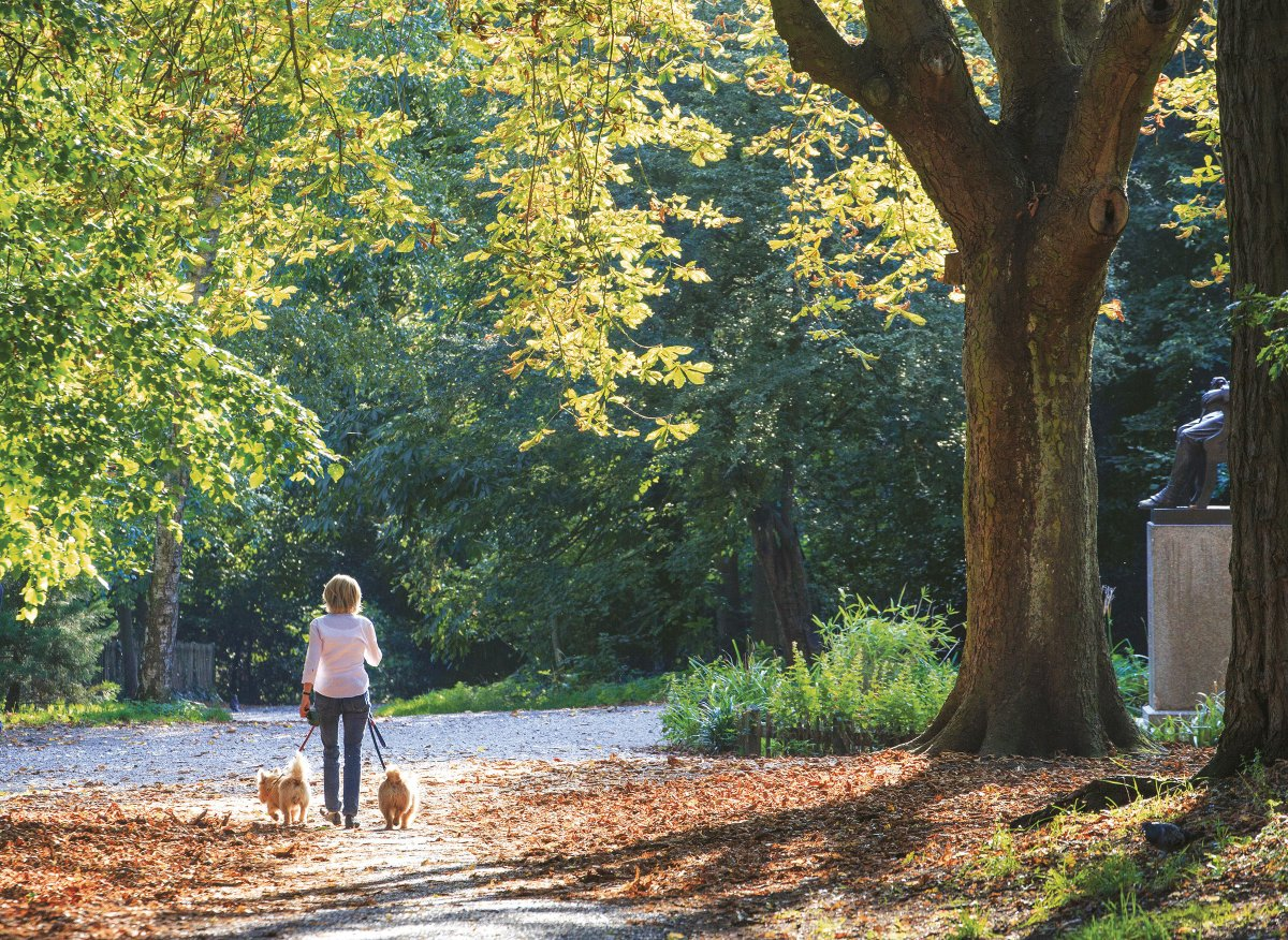 Woman is strolling with her dogs in Holland Park